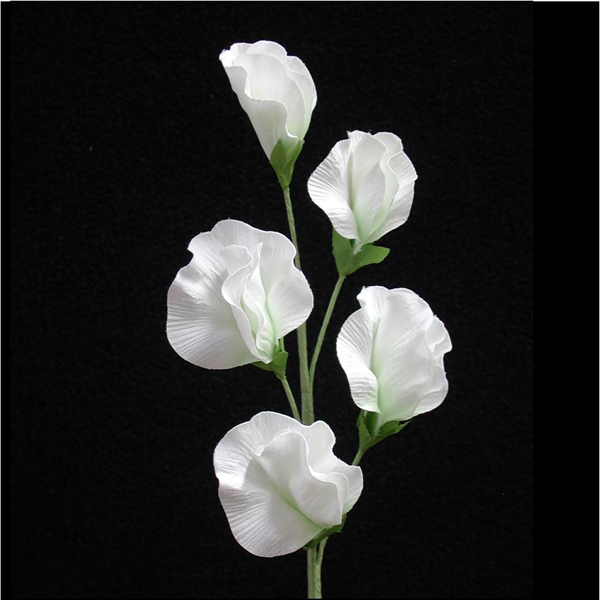 White sweet peas flowers choice image flower decoration ideas amazing white sweet pea flower gift best evening gown inspiration sweet pea drawings sweet pea flower mightylinksfo